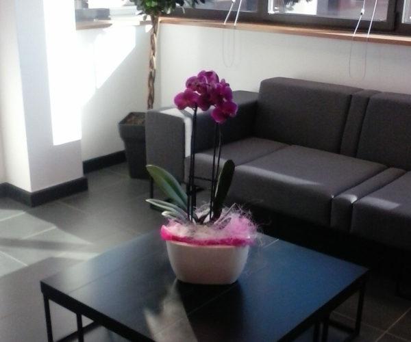 flores y plantas para interior de casa
